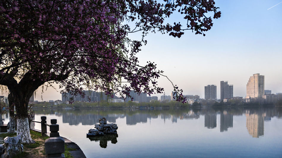 Evening Spring Twilight Beauty In Nature Begonia Flower Building Exterior City City Life Cityscape Clear Sky Lake Landscape Nature No People Outdoors Scenics Skyscraper Sunset Tourism Tranquility Travel Travel Destinations Tree Urban Skyline Water