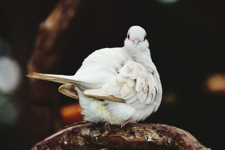 White bird perching on a branch