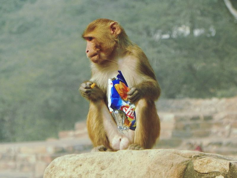 Funny monkey stories!!! Taking Photos Enjoying Life FUNNY ANIMALS Funny Moments Animal Photography Nature_collection Travelling Photography