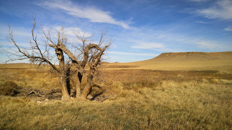Landscape Sky Scenics - Nature Environment Tree Beauty In Nature No People Semi-arid Plains Prairie Grassland South Dakota Mesa Dead Tree Lone Tree Silence Solitude Alone Lonely Quiet Tranquility Nature Grass Desert Remote
