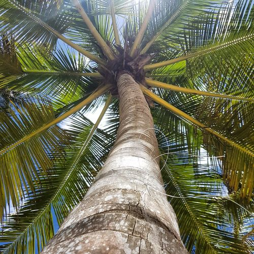 Tree Low Angle View Palm Tree Growth Day Tree Trunk Nature Full Frame Outdoors No People Sky Beauty In Nature Leaf Close-up