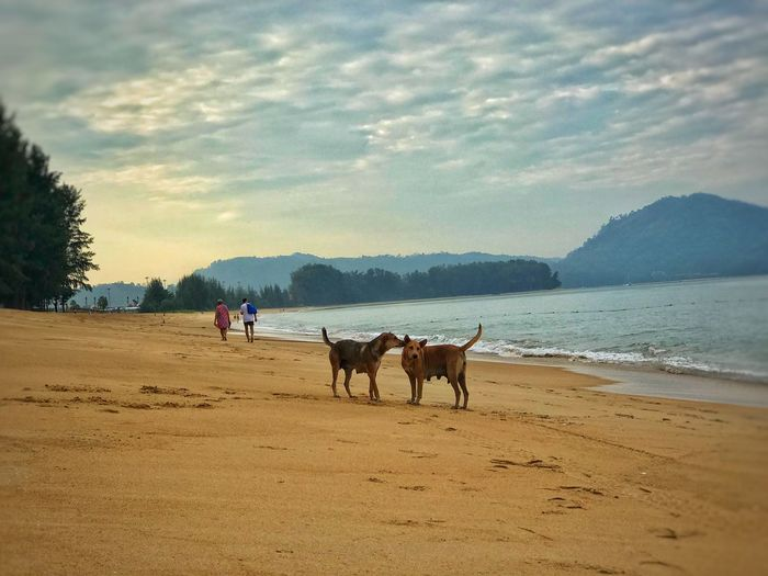 Friend Dogs Of EyeEm Dogs Day Phuket #EyeEmNewHere Domestic Animals Sand Horse Sky Beach Mammal Nature Cloud - Sky Beauty In Nature Pets Sea Men Outdoors Scenics Real People Togetherness Day Mountain Water Only Men