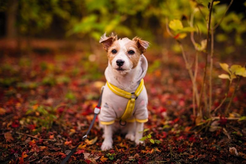 Dog One Animal Pets Animal Themes Domestic Animals Looking At Camera Mammal Focus On Foreground Portrait Outdoors Full Length Leaf Day No People Standing Grass Nature Boleh Bokeh Photography Dof Depth Of Field Dog Portrait EyeEm Best Shots EyeEmBestPics EyeEm Best Edits
