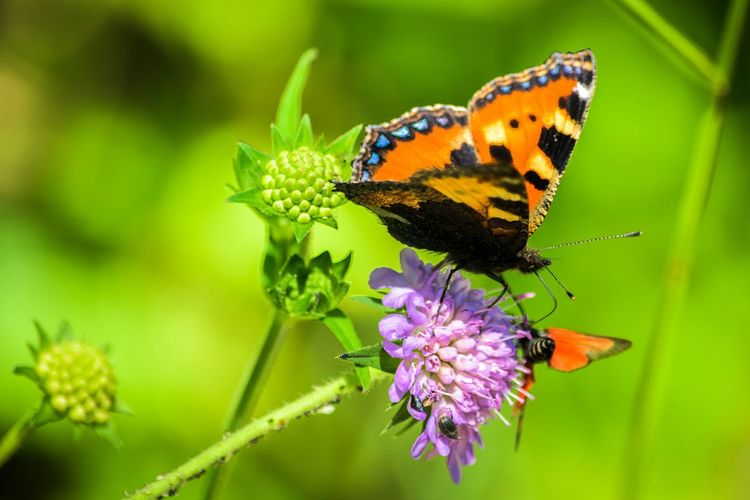 Butterfly Animal_collection EyeEm Best Shots - Nature Nature_collection EyeEm Nature Lover