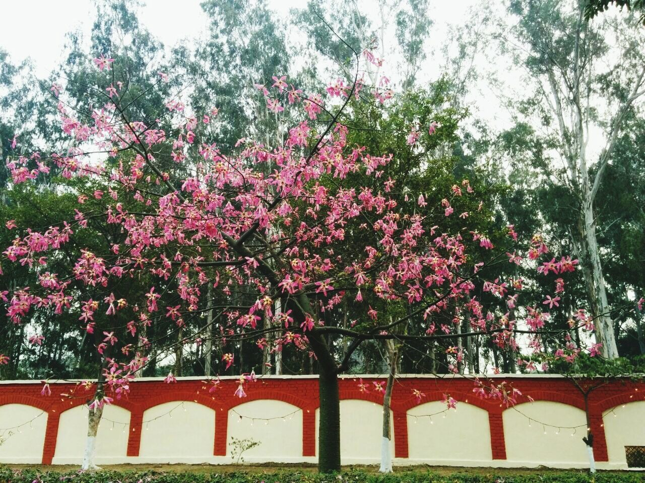 growth, red, tree, nature, outdoors, flower, no people, day