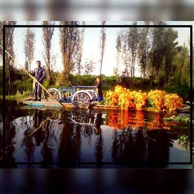 En ningún otro lugar, esto es México! Agriculture Mexicocity  Xochimilco_df Tradition november leyendas costumbres cempasuchil diadelosmuertos