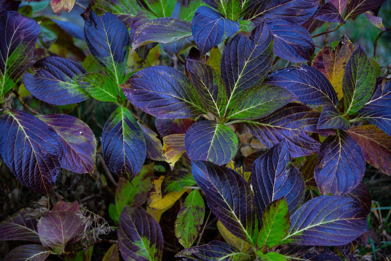 Close-up of purple flowering plant leaves in park