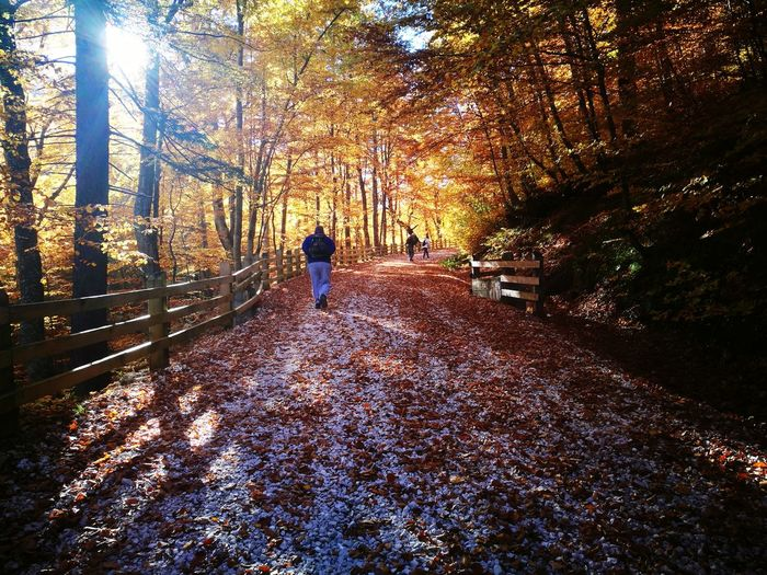 Rear view of people at forest during autumn