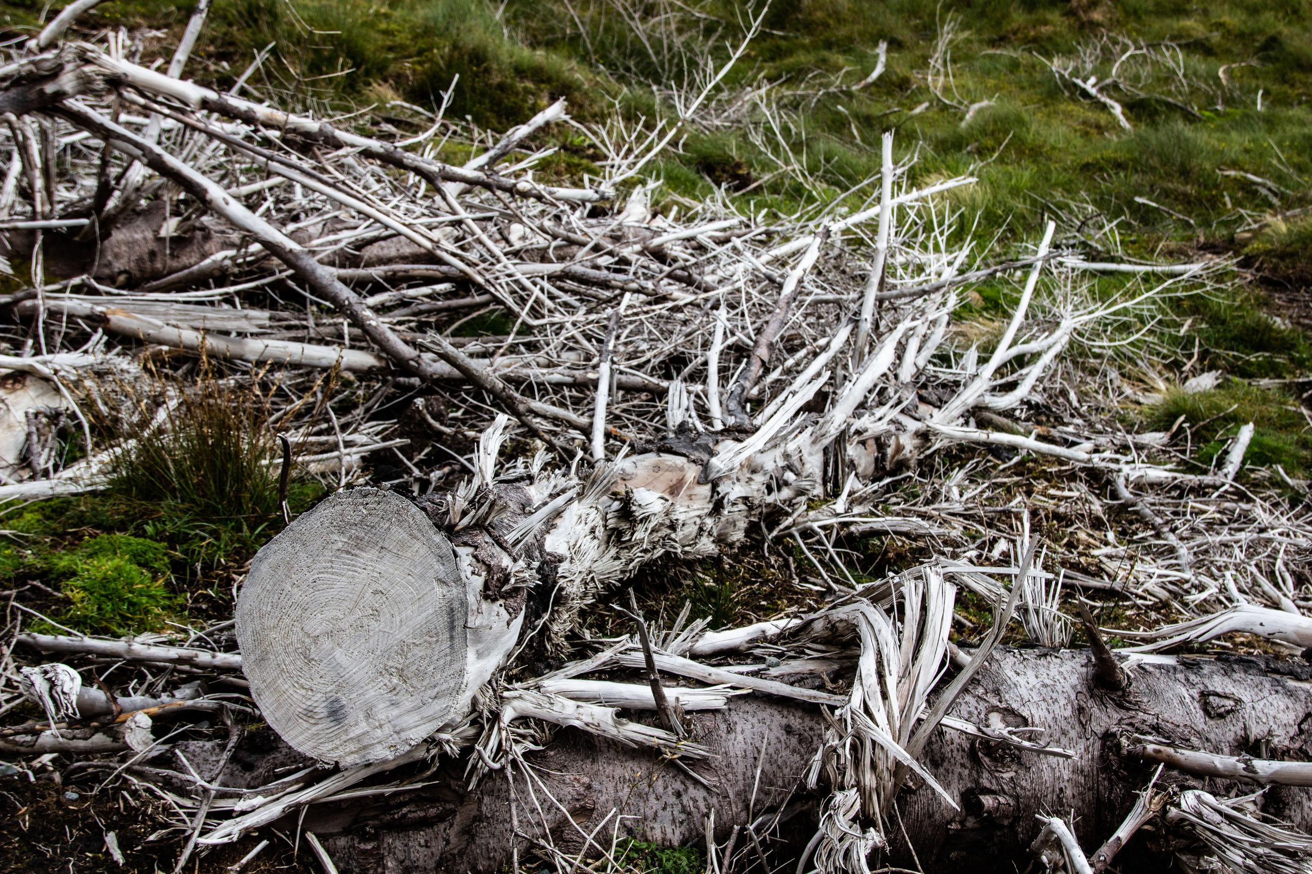 CLOSE-UP OF DEAD TREE IN FIELD