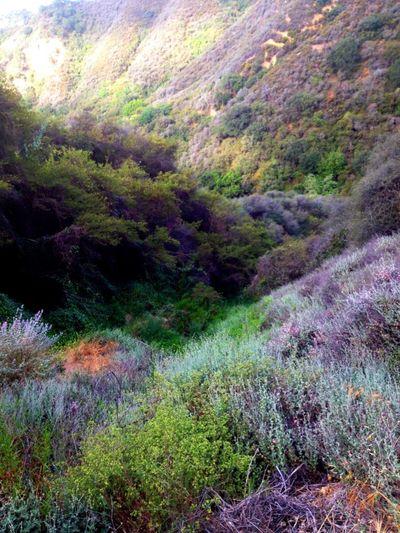 Nature WeAreJuxt.com AMPt_community Nature_collection