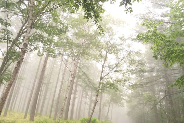 Low angle view of trees in forest during foggy weather