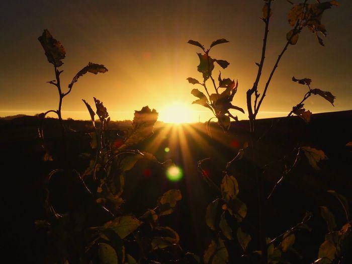 sunset Sky Sun