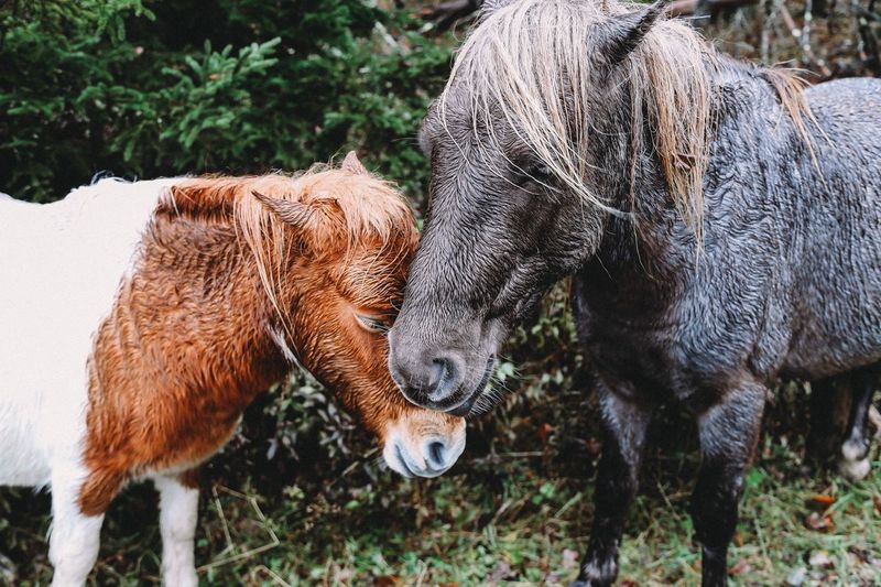 Love Affectionate Horses Animal Mammal Animal Themes Animal Wildlife Group Of Animals Vertebrate Domestic Animals Animals In The Wild No People Two Animals Field Herbivorous Plant Nature Land Day Livestock Standing Tree