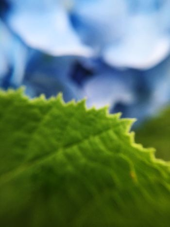 Green Colors Nature Photography Cerulean Blue Color Of Nature Blurry Blurred Leaf Flower In My Garden