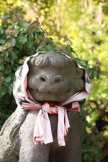 Japan Japan Photography Japanese Shrine Kamakura Shonan Shrine 小動神社