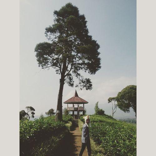 Ridwanderful di Negeri Ulat Pucuk.. Ridwanderful JarambahBandung DiBawahLangitBandung BandungIsMe