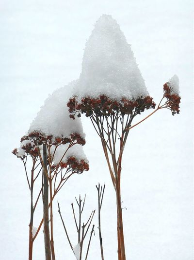 Dried Flowers in the Snow with Snowcone create Winter Flowers