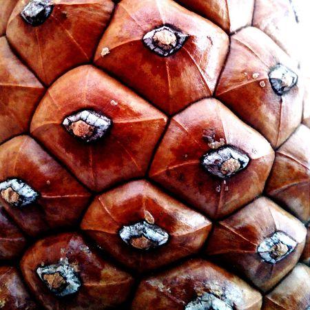 Cones detail...