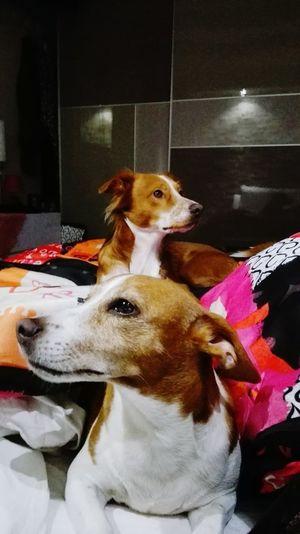 Domestic Animals Pets One Animal No PeopleLuna❤ Mydogs Sonny Onelove