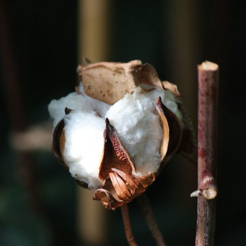 Close-up of dry flower