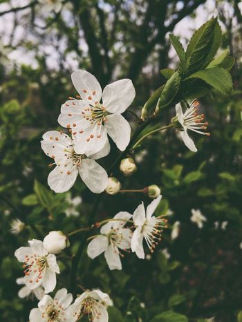 Spring Springtime Blossom Nature Nature_collection Nature Photography Naturelovers Nature_perfection Naturephotography Makro