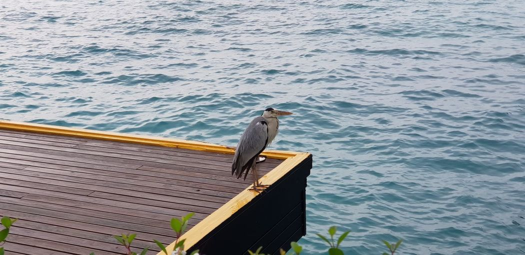 High angle view of seagull perching on wood