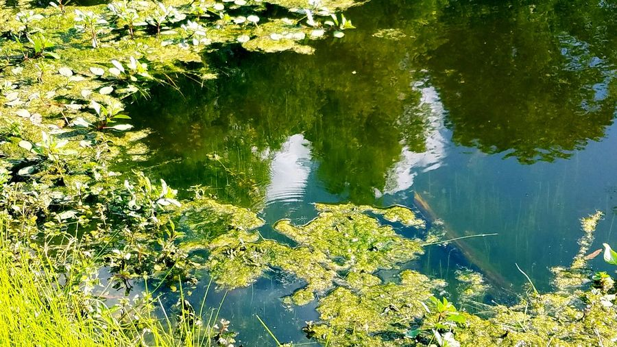 Reflection Water Nature Lake Day Forest Outdoors No People Pond The Great Outdoors - 2017 EyeEm Awards Hues Copy Space Spirituality Meditation Fragility Zen Tranquility Silhouette Cloud - Sky Artistic Reflection Tree Cloud Reflections The Pond Edge
