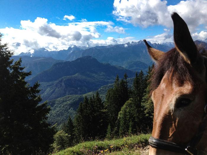 Alpen Alps Animal Themes Animal Wildlife Badreichenhall Bavarian Alps Domestic Animals Horse Maultier Mountain Mule Nature Sky