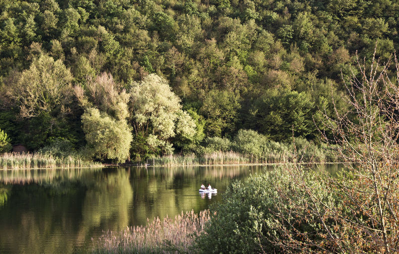 Swan swimming in lake against trees in forest