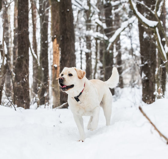 Dog in snow on land