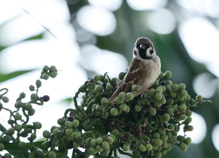 Close-up of house sparrow perching on plant