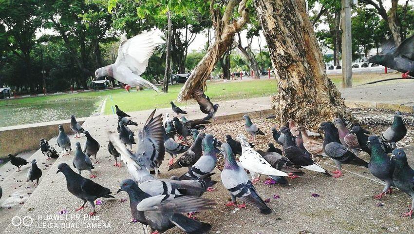 Family Bird
