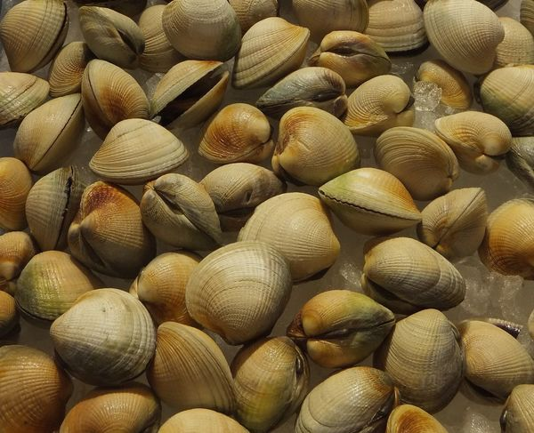 Cockles Shellfish🐚 Fish Market Food large group of objects Seashell Shell