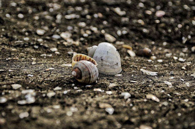 Shells on field