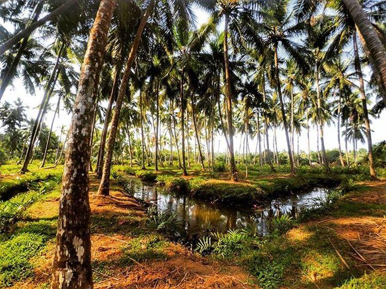 Kerala GodsOwnCountry Nature Coconutpalms River Canal Nature Xiaomiyicamera Yicamera Actioncamera Sportscamera
