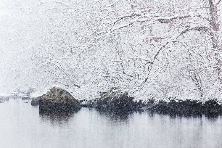 Thames River Winter Nature Cold Temperature Snow Tree Frozen Tranquility No People Water Bare Tree Branch Snowing Outdoors Day Ice Tranquil Scene Scenics Bird Animal Themes
