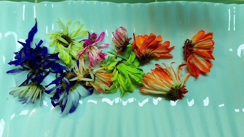 Dry daisies Boredom Bright Cia Ciao. ✌ Colorful Dry Flower  Fragility Freshness Potpourri