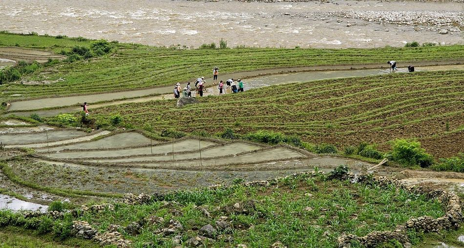 Vietnam Sapa Group Of People Real People Land Men Agriculture Occupation Field Working Plant Nature Landscape Farmer Farm Environment Green Color Medium Group Of People Rural Scene Crowd Adult