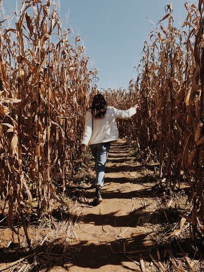 Frolicking in the corn maze