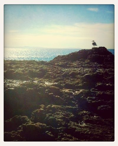 Mornin' :) Nature Enjoying The Sun Streamzoofamily Life Is A Beach