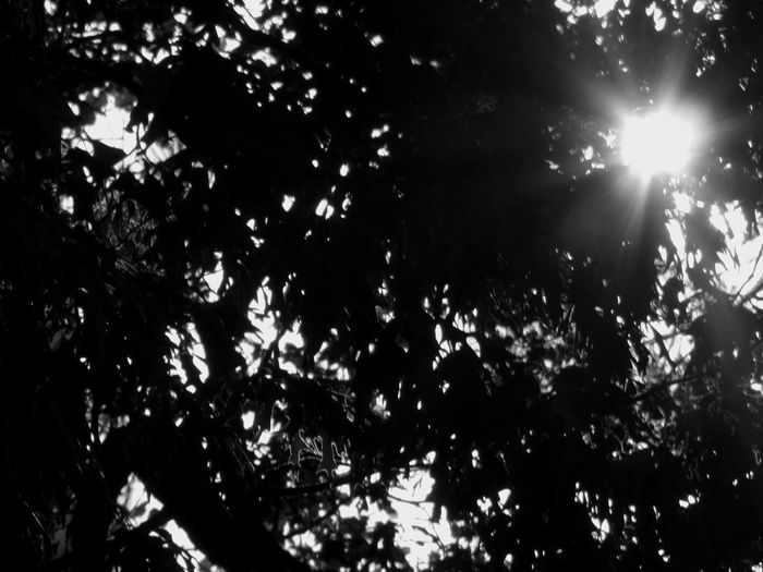 Leaves Leaves And Sky Leaves🌿 Sun Sunburst Black & White Black And White Black And White Photography Taking Photos Sunlight And Shadow Atlanta Ga Buckhead Buckheadatlanta
