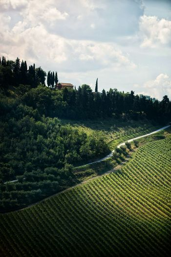 Tree Rural Scene Agriculture Tea Crop Irrigation Equipment Field Sky Landscape Cloud - Sky Green Color