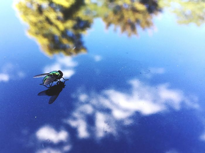 Mirror Fly Landscape Reflection