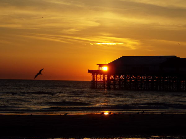 Sea Red Sky Sunset Over The Sea Seascape Sunset Sun Blackpool Central Pier Central Pier Seagull SEAGULL IN FLIGHT The Great Outdoors - 2016 EyeEm Awards 43 Golden Moments Miles Away