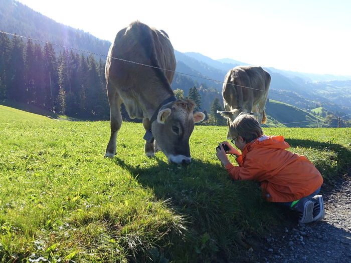 Camera - Photographic Equipment Field Livestock Beauty In Nature Boy Child Childhood Children Only Day Domestic Animals Education Grass Leisure Activity Lifestyles Mammal Nature One Person Outdoors People Photographing Photography Themes Swiss Swiss Mountains Switzerland Technology