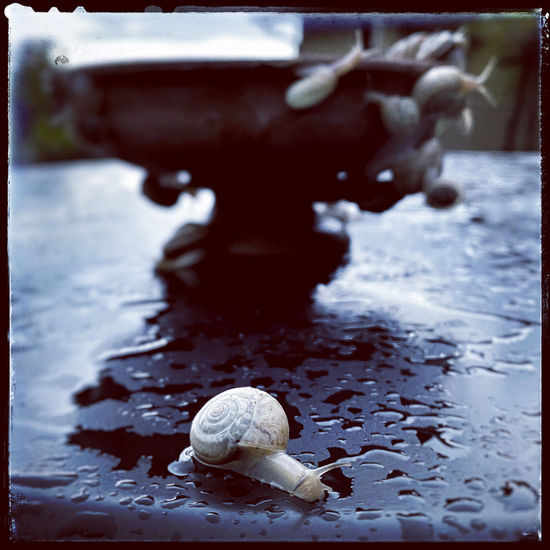 Close-up of snail in water
