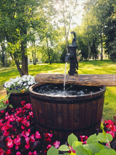 Plant Nature Tree Park Fountain Park - Man Made Space Water Flowering Plant Growth Flower No People Formal Garden Day Sunlight Garden Front Or Back Yard Grass Outdoors Spraying