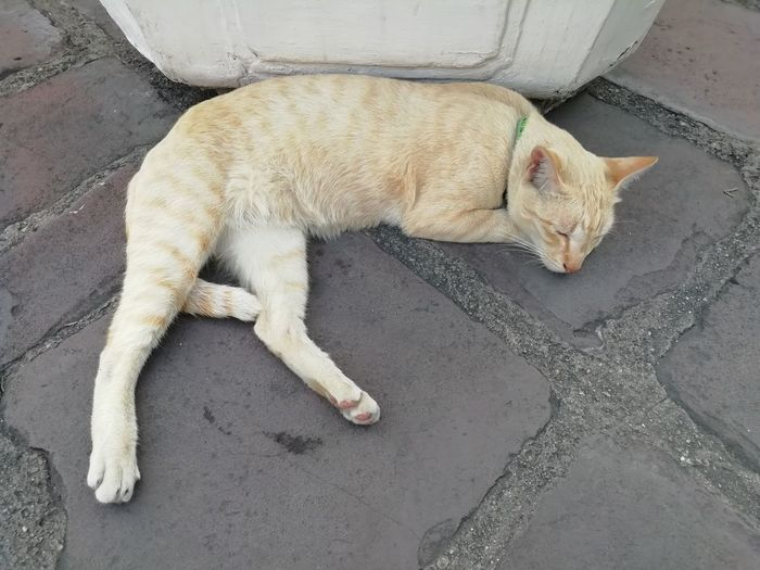 High angle view of cat sleeping on street