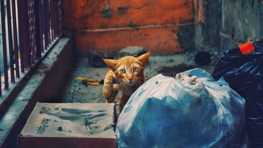 Kitty in the alley search for its treasure in garbage.. Searching For Food Searching Innocence Young Alley Garbage EyeEm Selects Domestic Cat Feline Pets Animal Themes Animal Eye Yellow Eyes Cat Undomesticated Cat