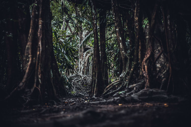 Forest Dark Scary Tree Nature Landscape Woods Background Foggy Fantasy Trees Haunted Gothic Misty Mysterious Mist Light Fog Jungle Horror Magic Mystery Shadow Roots Dramatic Black Evil Autumn Ground Spooky Mood Old Haze Rain Blue Path Moody Darkness Night Lonely